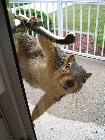 1359424411-squirrelondoor